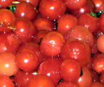 CHERRY RED CURRANT (Ribes sativum)